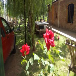 rosas-rojas-en-San-Luis-Cabañas-ROMA